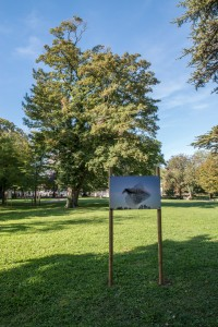 La photo nature dans le Parc de la Mairie