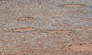 Cercles de fées en Namibie